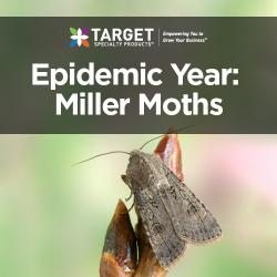 miller moths in pantry