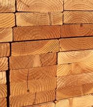 drywood termite droppings