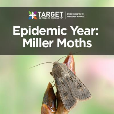 miller moths in pantry